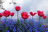 Flowers On The Lake Geneva, Montreux.