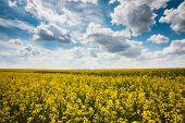 stock photo of biodiesel  - Green Field Blue Sky - JPG
