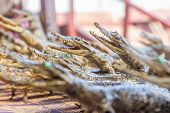 image of crocodiles  - small dead crocodiles in souvenir shop - JPG