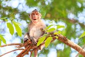 picture of crab  - Monkey  - JPG