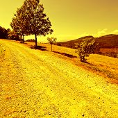 picture of dirt road  - Winding Dirt Road in the Tuscany Vintage Style Toned Picture - JPG