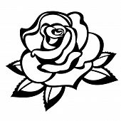 image of single white rose  - Rose on a white background - JPG