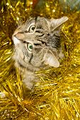 pic of yellow tabby  - Cute tabby cat in Christmas yellow tinsel holiday background. ** Note: Shallow depth of field - JPG