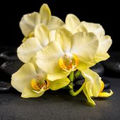 picture of yellow orchid  - beautiful spa concept of yellow orchid phalaenopsis on black zen stones with drops closeup - JPG
