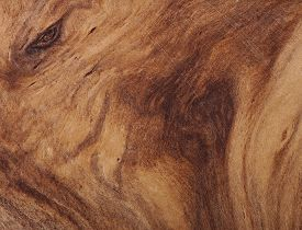 pic of wood  - background of wood - JPG