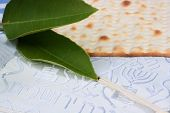 pic of matzah  - A piece of matzah and mandarin leaves on a blue and white tallit - JPG