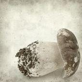 pic of boletus edulis  - textured old paper background with porcino mushroom Boletus edulis - JPG