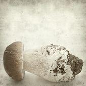 image of boletus edulis  - textured old paper background with porcino mushroom Boletus edulis - JPG