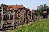 pic of auschwitz  - wired fences of concentration camp Auschwitz in Oswiecim Poland - JPG
