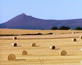 8X10 Bales And Bennachie