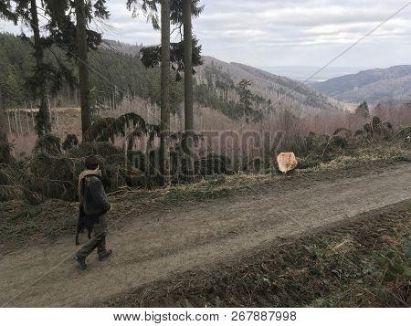 Ranger Walks Into Dead Spruce