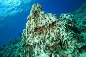 Environmental problem: coral killed by Global Warming
