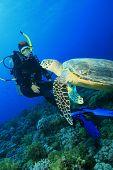 Tortuga cumple con Scuba Diver