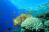 Coral and Fish in Blue Water