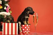 Year Of Dog, Holiday Celebration With Champagne In Wine Glass. Santa Puppy At Christmas Tree In Pres poster