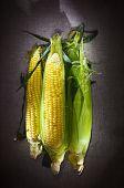 Still life with three corn ears on gray linen canvas