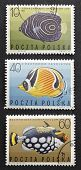 POLAND - CIRCA 1967: three stamps printed in Poland shows image of coloured fishes: Pomacanthus Imperator, Chaetodon Fasciatus and Balistoides Conspicillum. Poland, circa 1968