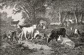 Antike Abbildung einer Herde Weiden im Wald. Zeichnung von van Marcke, veröffentlicht am l'illustrati