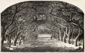 Old illustration of chestnut walk.  Created by De Bar and Cosson-Smeeton, after tablet of Rousseau i