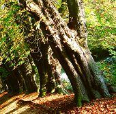 Line Of Trees