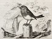 Robin old illustration (Erithacus rubecula). Created by Kretschmer and Wendt, published on Merveille