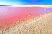 Pink Salt Lake At Gregory In Western Australia. Scenic Shore Of Hutt Lagoon Between Geraldton And Ka poster