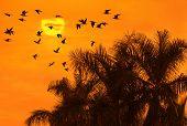 Постер, плакат: Птицы летать выше пальмы см больше птиц и закат обои в моем портфолио