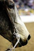Horse Head In Arena