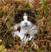 Whiskers In Weeds