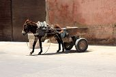 Gray Donkey With An Empty Cart