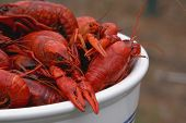 Bowl Of Boiled Crawfish