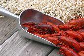 Boiled Crawfish In Scoop