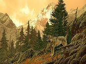 Wolf In The Rocky Mountains