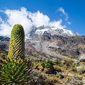 Guardián del Monte Kilimanjaro