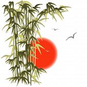 Bamboo On Sunset Background