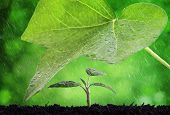 stock photo of rain  - New life protection and nurture concept rain on a seedling - JPG