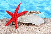 Open oyster with pearl on sand on water background