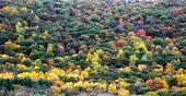 Fall Foliage in Kent Connecticut