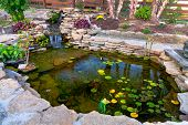 stock photo of waterfalls  - Decorative koi pond in a garden - JPG