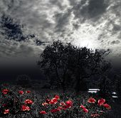 moon night and red poppy meadow