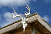 image of deer rack  - cabin contains the mounting of a deer skull and antlers with a clouded blue sky in the background.