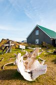 foto of iceland farm  - White Whale bones in Dj - JPG