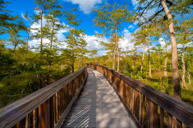 image of collier  - Wooden bridge in a forest Kirby Storter Roadside Park Ochopee Collier County Florida USA - JPG