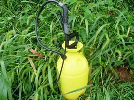 stock photo of pest control  - Photo of a chemical sprayer sitting in tall grass - JPG
