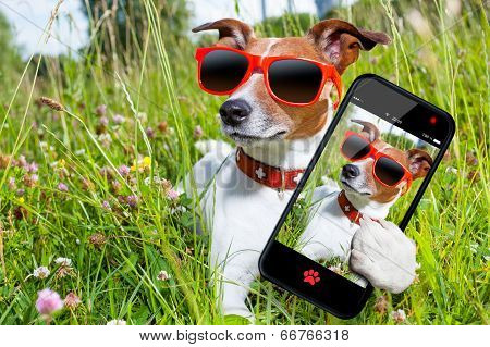 Selfie Dog In Meadow poster