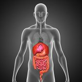 stock photo of sphincter  - The human digestive system is a complex series of organs and glands that processes food - JPG