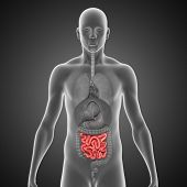 Small intestine black bg