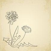 Dandelion pencil artwork on paper background