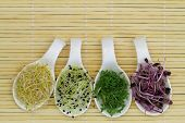 Alfalfa, leek sprouts and watercress on porcelain spoons on bamboo mat with copy space