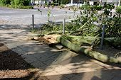 stock photo of wind blown  - Fallen branch of tree blown over by heavy winds on the pavement - JPG